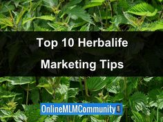 In today's post, I want to share my top 10 Herbalife Marketing Tips and Herbalife Success Tips. These are simple things you can do to grow your business. Herbalife Tips, Herbalife Shake Recipes, Herbalife Nutrition, Sales And Marketing, Marketing Plan, Business Marketing, Nutrition Club, Network Marketing Tips, Promotion