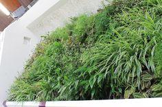 Zoom du #mur de la #piscine végétalisée #Réalisation #RootsPaysages #paysagiste #Yvelines #Châteaufort #Greenwall #IledeFrance #plantes #végétalisation #intérieur