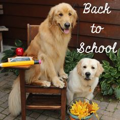"""Back to School... wishing all my """"kids"""" a great day."""