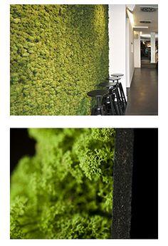 Greenwalls zijn wandpanelen voorzien van écht mos. Noors Rendiermos is geplakt op MDF Spectrum zwart. Van nature heeft het mos een uitstekende akoestische werking en brandwerende eigenschappen. Door een behandeling met natuurlijke mineralen en pigmenten verkleurt het mos niet en is het stofafdrijvend. http://www.iboma.com