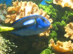 a photo i took at bunakan/great barrier reef