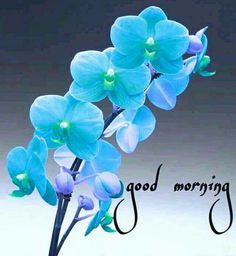Good Morning Wishes Friends, Happy Good Morning Quotes, Good Morning Beautiful Quotes, Good Morning Images Hd, Morning Morning, Good Morning Flowers, Good Morning Messages, Good Morning Good Night, Morning Pictures