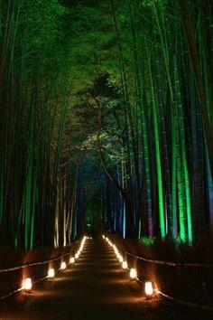 京都嵯峨野竹林の道