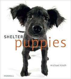 Shelter Puppies, By Michael Kloth.  The answer to why you should adopt a shelter pet!
