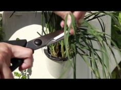 Harvesting Herbs. Don't have a Tower Garden Yet? visit: www.cstolle.towergarden.com