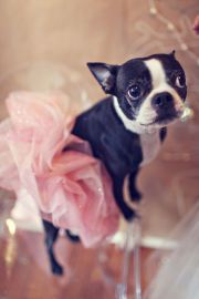 @Caila Baltas since we seem to dress up the dogs I think a Tu-tu is needed at our house :)