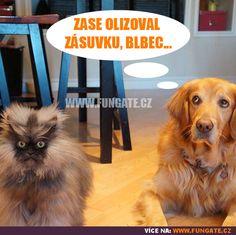 Best Dog memes Funny animal memes make me laugh Funny Quotes,memes, pictures - Funny Animals Funny Dog Captions, Cute Animals With Funny Captions, Dog Quotes Funny, Funny Animal Memes, Funny Cat Videos, Dog Memes, Funny Dogs, Funny Animals, Funny Humor