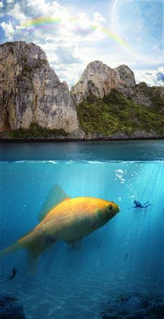 Goldfish surreal