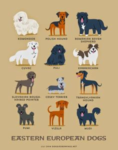 Dogs of the world - Eastern European Dogs
