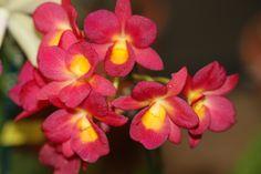 Great color Orchid Images, Orchids, Rose, Flowers, Plants, Color, Pink, Colour, Plant