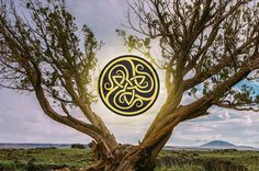 Find Out Your Celtic Tree Symbol And What It Says About You Mines the reed I'm ivy husband's Rowan I luv this tree thing! Celtic Signs, Celtic Symbols, Celtic Art, Irish Celtic Tattoos, Tree Of Life Symbol, Celtic Tree Of Life, Celtic Astrology, Celtic Animals, Irish Culture
