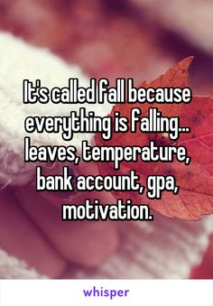 It'S called fall because everything is falling leaves, temperature, bank account, gpa, motivation. Funny Quotes, Funny Memes, Hilarious, College Humor, College Life, Hull College, British College, State College, Whisper Confessions