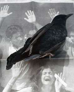 Geert Goiris, Dead Bird, 2008