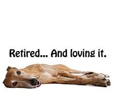 The way life should be for a greyhound.