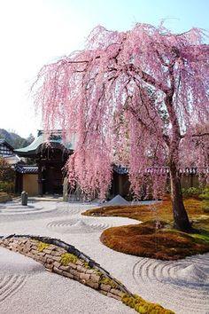Il Salice rappresenta l'albero della vita e un simbolo di longevità. In Giappone, il salice era considerato l'incarnazione della dolcezza e della grazia. In Cina, il salice è diventato anche la personificazione della primavera, della bellezza femminile e dell'amore. Inoltre, gli si conferisce la capacità di allontanare gli spiriti maligni. Ancora oggi in Oriente ha un simbolismo positivo, rappresentando l'immortalità, l'eternità e la spiritualità.