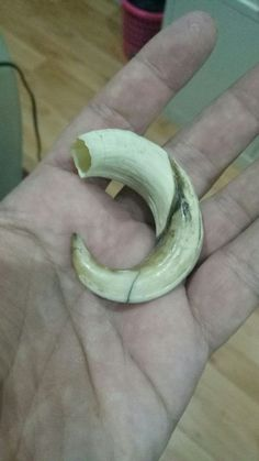 Pig tooth