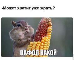 1461474593170947026.jpg (604×499)