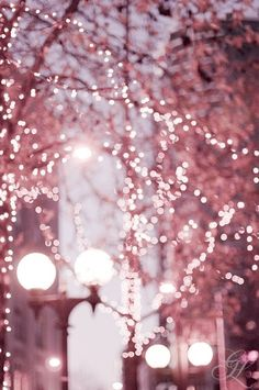 #Pink blossom #fairylights