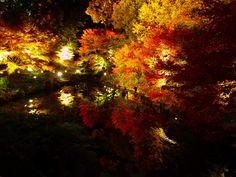 香嵐渓ライトアップほどの規模ではないですが、徳川園のもみじのライトアップもすばらしかったです!!