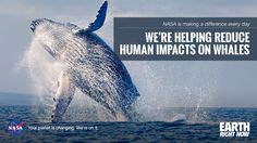 With NASA satellite data we are helping save the whales. http://1.usa.gov/1INhumd #EarthRightNow