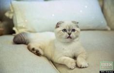 I am seriously obsessed with Taylor Swift's cats. How are they so cute?