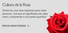 Rosas Don Eloy - Don Eloy Roses - The finest flowers for your special days