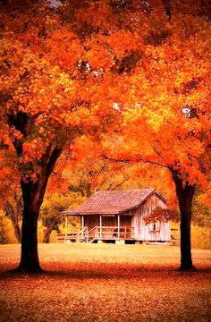 Cabin in the Missouri Ozarks in autumn Fall Pictures, Fall Photos, Pretty Pictures, Beautiful World, Beautiful Places, Beautiful Gorgeous, Autumn Scenes, Jolie Photo, Autumn Leaves