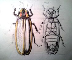 firefly, insect - Google Search