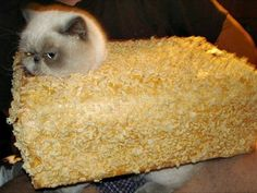 Rice Krispies Treat | 16 Adorable Pets Who Dressed Up As Food For Halloween
