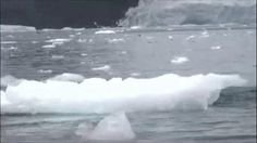 The moment a Leopard Seal took on a penguin in the Antarctic