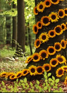 #Sunflowers                                                       …