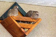 Lovey Dovey Diamond Dovehouse – World of Birdhouses Ground Bird Feeder, Bird House Plans Free, Dove House, Homemade Bird Houses, Wooden Bird Houses, Dove Bird, Worm Farm, Worm Composting, Pet Chickens