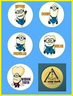 Minions Which tooth resembles you the most: Incisor, Canine, Premolar, Molar or Wisdom Tooth? Dental Hygiene School, Dental Life, Dental Art, Dental Assistant, Dental Hygienist, Dental Health, Dentist Jokes, Dental Posters, Cute Tooth