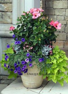 Pink hibiscus paired with purple wave petunias, chartreuse potato vine, dusty miller & impatiens Container Flowers, Container Plants, Container Gardening, Hibiscus Tree, Hibiscus Flowers, Purple Hibiscus, Pink Purple, Porch Plants, House Plants