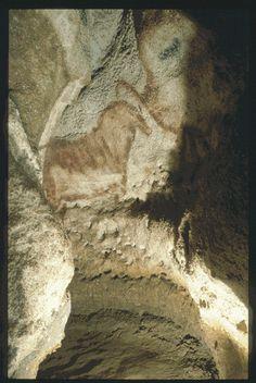 MONTIGNAC (Dordogne, 24). Grotte de Lascaux. Bilan des études. Récapitulation. Légende : Diverticule axial, au fond, paroi droite : cheval de profil droit et à droite, un bison rouge de profil droit.