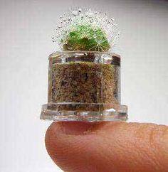 wearable earthly delights: teeny tiny plants