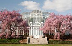 Botanical Gardens, NYC ,