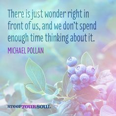 Michael Pollan Quote About Wonder