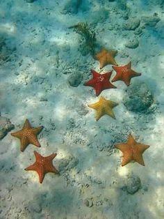 Scattered Starfish, near Watermelon Bay, Saint John Island, US. Best Picture For Sealife Photograp Under The Water, Under The Sea, Underwater Life, Underwater Photos, Deep Blue Sea, Yellow Sea, Orange Yellow, Ocean Creatures, Tier Fotos