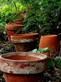 Line of pots in the garden. Crusty pots at that! Growing Succulents, Modern Garden Design, Garden Crafts, Clay Pots, Shade Garden, Dream Garden, Garden Pots, Garden Sheds, Garden Inspiration