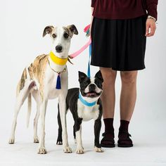 Kai and Oscar in their Sunday best looking too cute for their own good! They wear Dogsnug Ray of Sunshine #dogcollar and leads available in our online shop photo by @pkoraca #superdog #petsofinstaworld #instapup #lurchers #londondog #puppiesofinstagram #dog #sighthounds #Sighthound #whippet #whippets #whippetlove #whippetpuppy #ilovemydog #doglover #dogslife #dogoftheday #greyhounds #greyhounds #whippetsofinstagram #italiangreyhounds #italiangreyhoundsofinstagram #bostonterriersofinstagram…