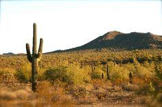 This is Arizona!  Sonoran Desert