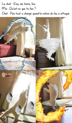 Only the Catvatar master of all four elements could save the world. Funny True Quotes, Funny Me, Funny Kids, Cat Jokes, Nerd Jokes, Funny Images, Funny Pictures, Manga Anime, Video Humour