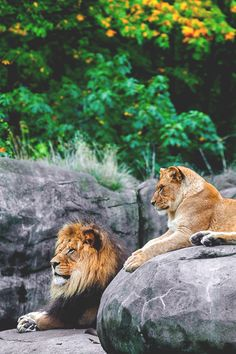 King & the Queen ©
