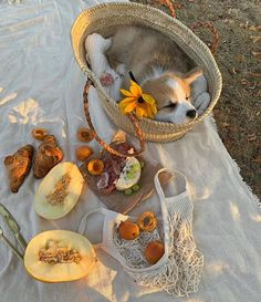 Spring Aesthetic, Nature Aesthetic, Aesthetic Food, Aesthetic Outfit, Comida Picnic, Baby Animals, Cute Animals, Picnic Date, Picnic Menu