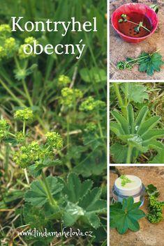 Kontryhel obsahuje třísloviny – látky, které stahují. Působí tedy protizánětlivě v zažívacím traktu, ale i v dutině ústní. Uklidňuje podrážděnou pleť, kterou také výborně čistí, pomáhá regenerovat vazivo – používá se do mastí, olejů, masek nebo pleťových vod na vypnutí povadlé pleti dekoltu i prsou. Herb Garden, Home And Garden, Diy And Crafts, Herbs, Gardening, Food, Lawn And Garden, Essen, Herbs Garden