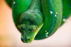 EXOTICA Reptilienmesse PREMIERE! Animals, Animales, Animaux, Animal, Animais