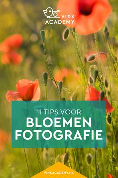 Bloemen fotograferen: 11 tips • Vink Academy Digital Art Tutorial, Studio Setup, Art Tutorials, Photoshop, Creative, Photographers, Om, Accessories