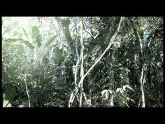 Campaña guerrillas navidad en colombia