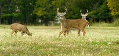 Seven Things to Know About Temperature and Deer Activity | Outdoor Life